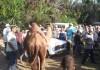 מועדון פיברקלאב סוגר את הקיץ – גמלים אוכלים סוסיתות ?